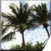 vacation rentals san juan del sur,information